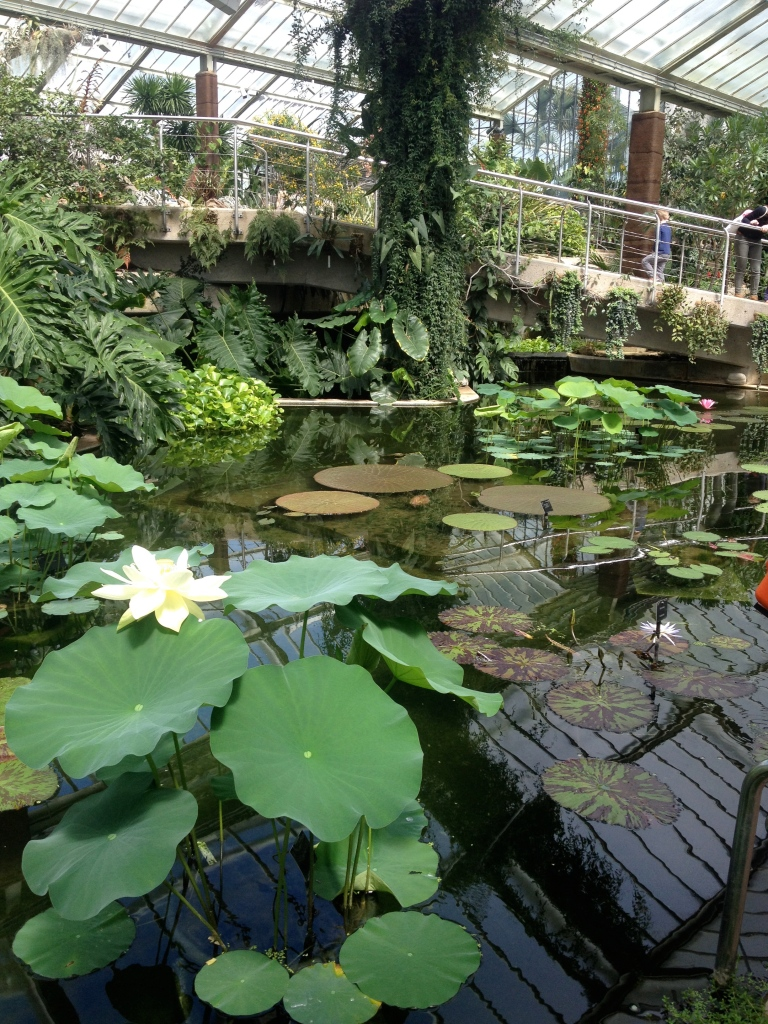 Nelumbo (Water Lotus) and Victoria amazonica in the Princess of Wales Conservatory.