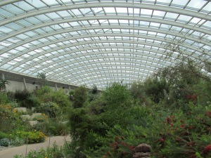 A look inside the conservatory, or glasshouse which is home to meditteranean flora.