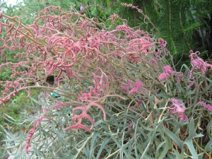 Plant ident 1