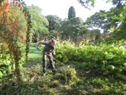 Raking up the newly strimmed wildflower 'meadow' on the Bulb Slope. The bulb slope is one of the areas of Hidcote currently under development - the new planting scheme will be inspired by wildflower meadows in the Maritime Alps, where Lawrence Johnston is thought to have taken inspiration.