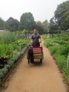 Phil transports the harvested potatoes (or 'spuds' as we Brits like to call them) to the potting shed where they will be washed and prepared ready for use in the restaurant and for sale to some of Hidcote's many visitors.