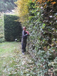 Oh the perils of the 'roomed' garden! It takes the garden team around 8 months to complete the cutting of all the hedges here at Hidcote, with each member of the team usually spending 2 days each on the trimmers. Phil has spent many a long hour cutting hedges around the garden so is trusted to tackle the front of the hedge while I (pictured here) am new to the garden and have a bit of a practise on the back!