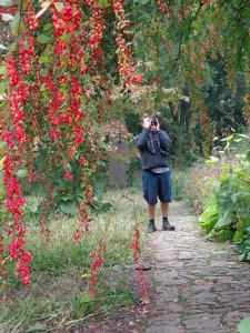 Phil photographing plants (here an unknown Berberis spp.) for the plant ident he compiles each month for staff and volunteers at Hidcote.