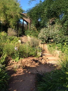 The Mediterranean Garden is a more recent addition, displaying a wide range of drought-tolerant plants which hail from Mediterranean-type climates around the world.