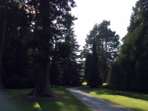 Bicton Park Botanical Gardens is renowned for its conifer collection, displayed in the extensive Pinetum.