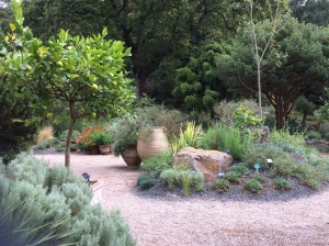 The Mediterranean Garden is a more recent addition to Rosemoor. To cope with the wet Devon climate raised beds and large quantities of grit were used to provide the free-draining conditions favoured by this range of plants.