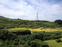 Banks for rice production and forests are few of the elements of Satoyama.