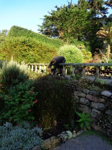 Phil weeds a tricky spot in the Med. Garden