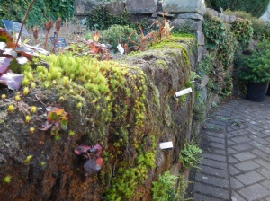 A very interesting natural wall built using peat blocks imported from sweden, over time they're and ideal growing medium moisture loving plants (including moss)