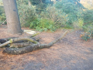 This area started off as a bare area of soil which had been left after low lying branches from a Pine tree had been cut off.
