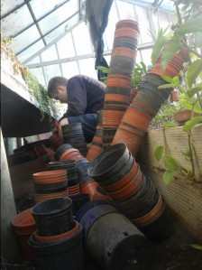 We were almost snowed under with the amount of pots Ursula had collected over the years.