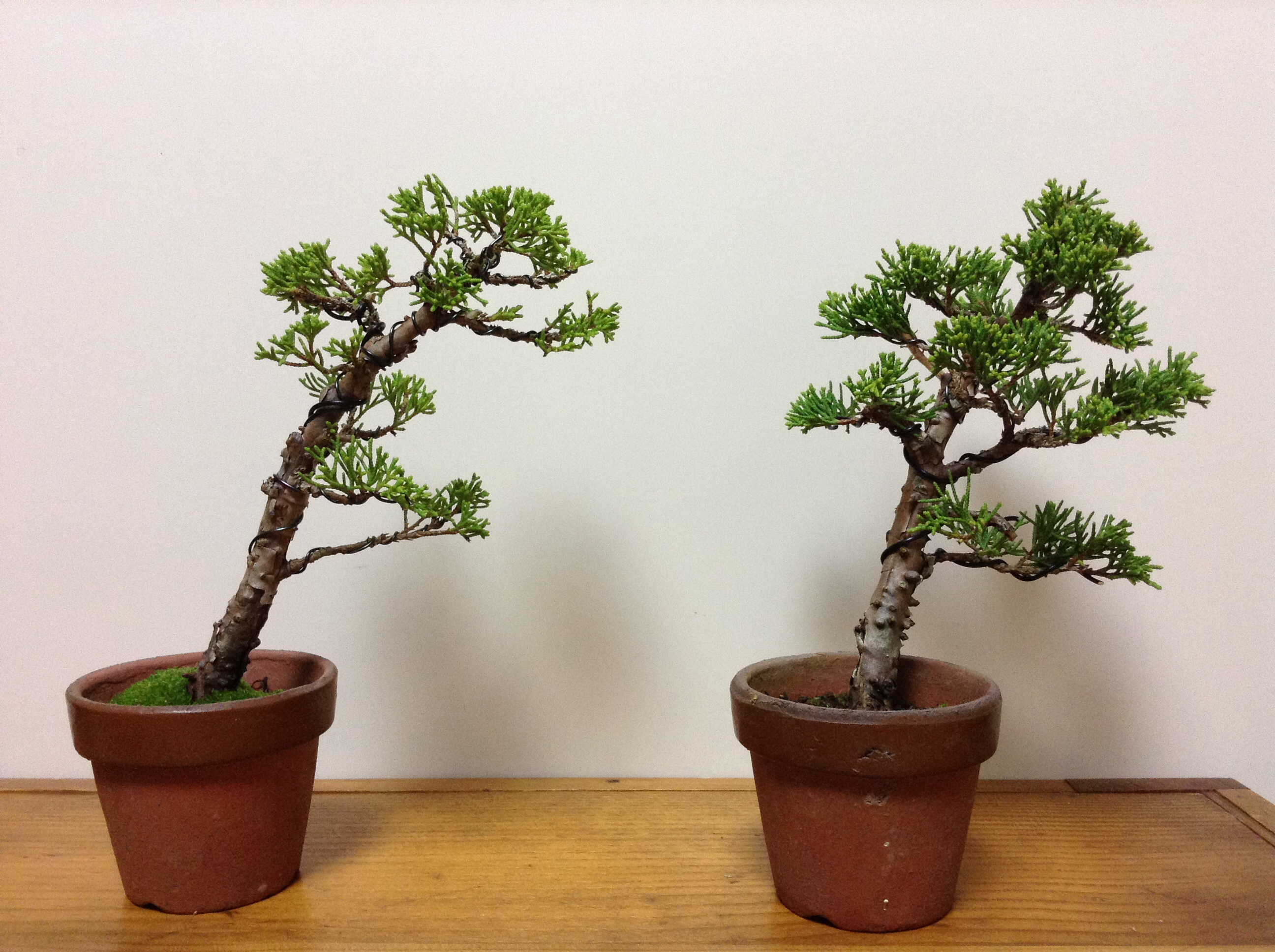 Bonsai Basics With Koji Matsusue Triad Fellowship