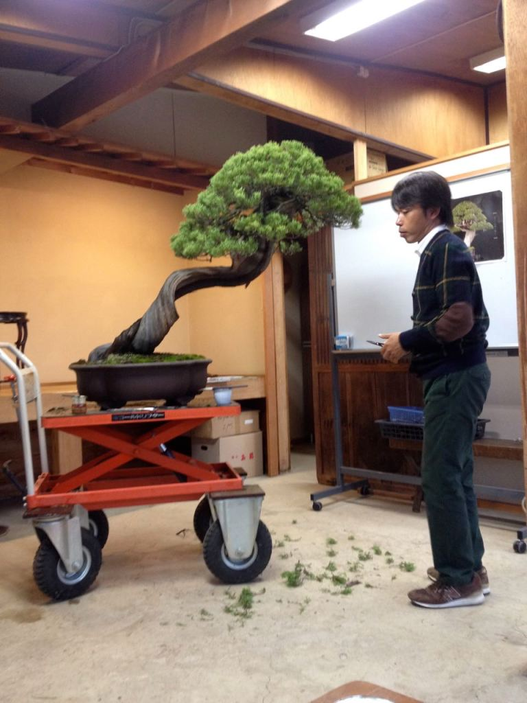 Matsusue-sensei our bonsai teacher.
