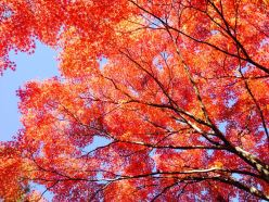 More amazing fall color.