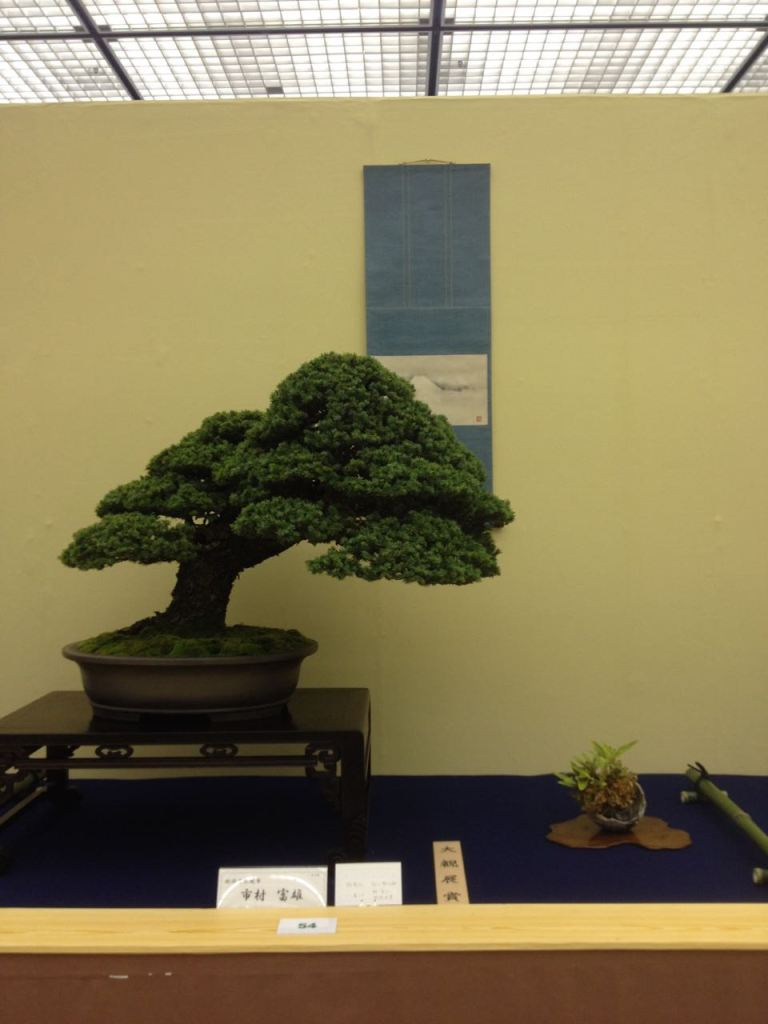 Bonsai displays use the tree, scroll and accent plant to depict a scene.