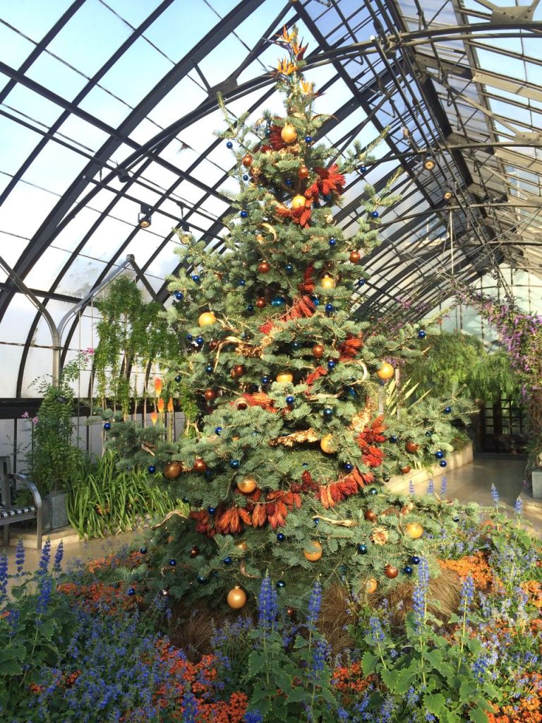 My favorite Christmas tree. The tree is decorated with protea flowers and glass strelitzia reginae (bird of paradise) flowers. Located in the Mediterranean house.