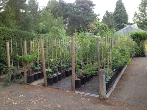 A section of the Nursery used to train trees, giving them good posture and strengthening their stems.