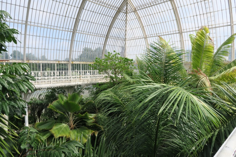 Inside the palm house, from the upper floor. The view was worth the intense heat