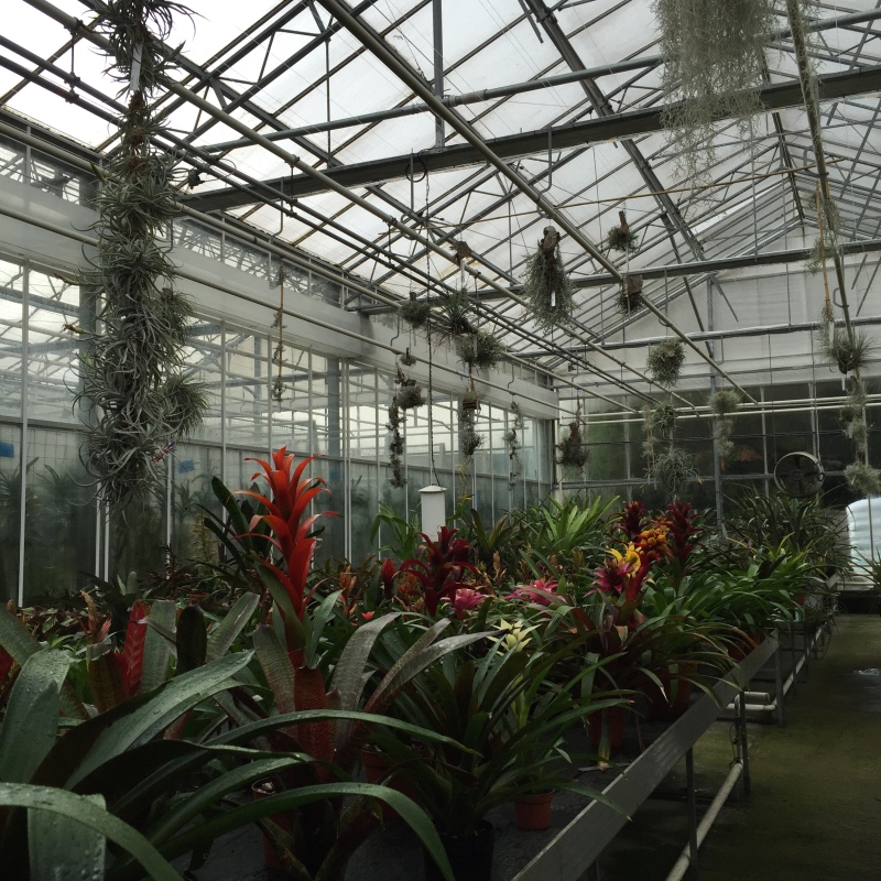 In the Bromeliad house at Kew, one of many houses that hold plant collections