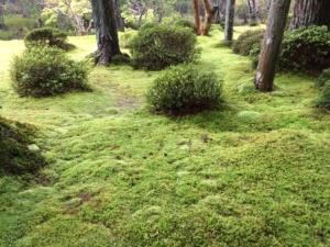 12a - Saiho-ji (4)