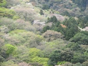 3a - Kameyama Park (5)