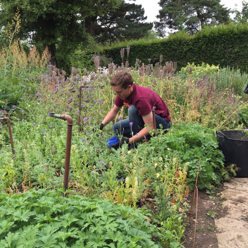 I learned a tremendous amount about gardening by being immersed in work at Hidcote