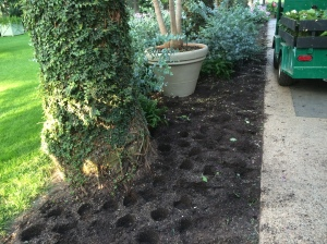 Once the plants are removed the borders are given a little rake over to level the soil and remove fallen leaves and flowers.