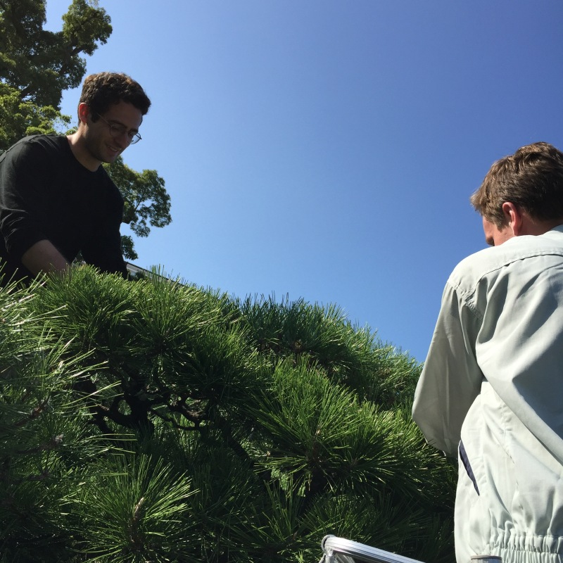 It is a time consuming process, especially when considering the large number of black pines on the property!