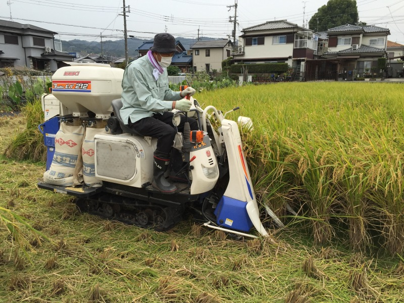 The rice combine in action. Rice fields are found just about anywhere, even in urban areas. Therefore, the fields are often small and so is the machinery. Both Tim and I were given the chance to drive the combine and harvest a few bags each!