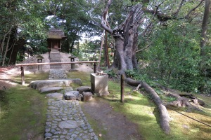 This tree had only one stem left, propped up with stakes, and was left to provide quite a dramatic scene at this small temple at Korakuen in Okayama.