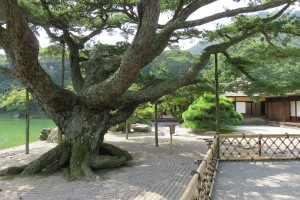This five-needle pine at Ritsurin Garden in Takamatsu, now well over twenty feet tall and wide, was once a bonsai given to the original owner in 1833.
