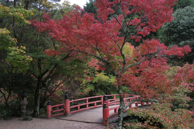 Fall color at its best on Miyajima Island, one of Japan's three most scenic places