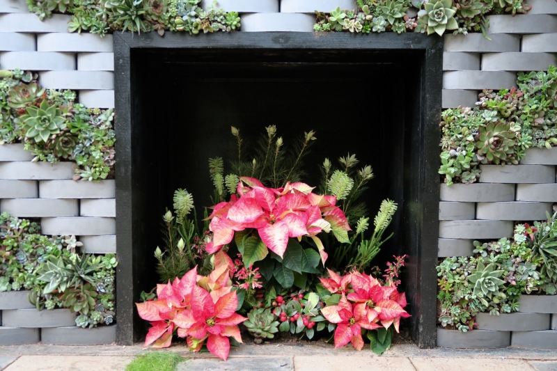 "The ""fire"" using Picasso poinsettias"
