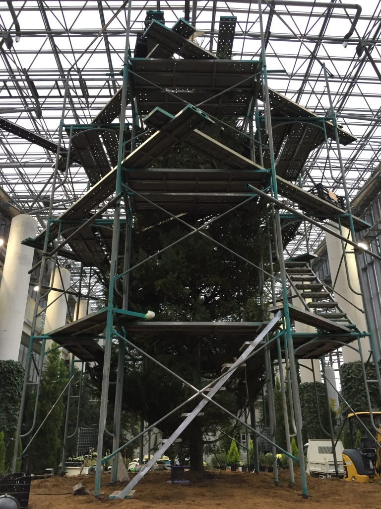 Day 1: In order to decorate this behemoth, scaffolding is utilized
