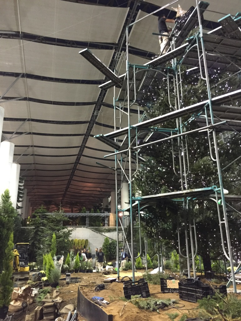 Day 1: One final look at the progress under the roof of the conservatory