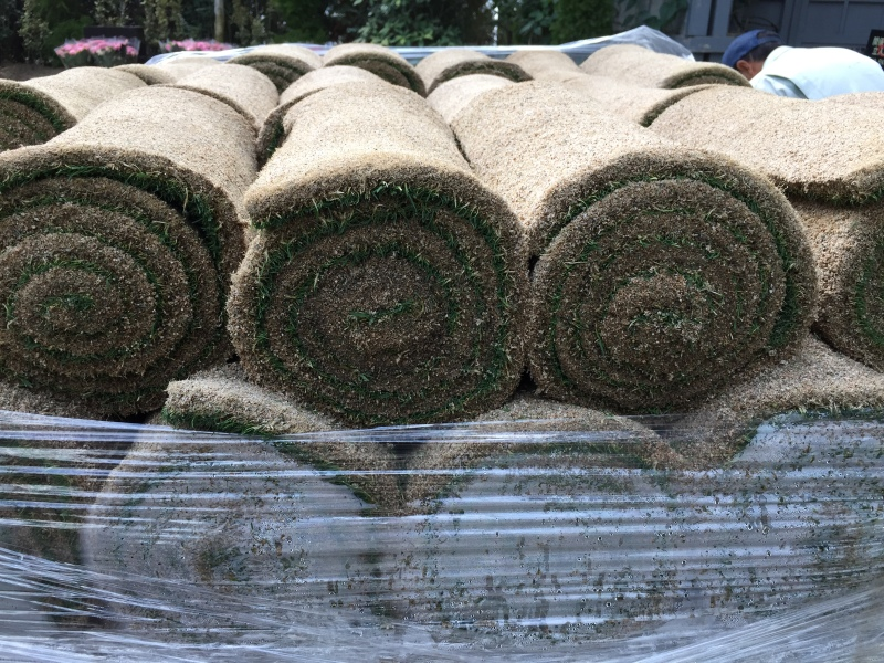 Day 3: This was the cleanest sod I'd ever seen! It reminded me of Swiss cake rolls which I hadn't realized I'd been missing
