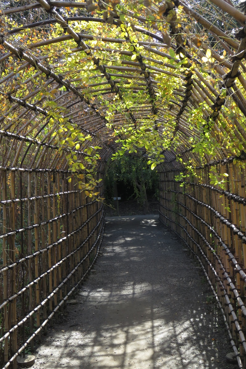 While at the end of its life, this Lespedeza Tunnel creates an intimate and interesting space.