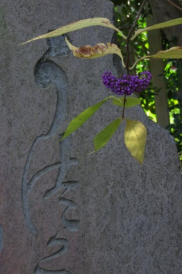 This Callicarpa provides a splash of color against one of many large stone tablets in the garden.