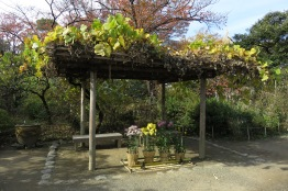 Perhaps not a gardeners first choice, Kudzu provides the shade for this arbor.