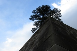 A black pine continues to grow at the top of a castle ruin on the Imperial grounds. The stone foundation was constructed from enormous carved stone.