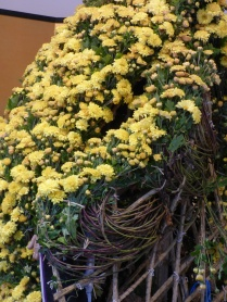 The mums are tied in bunches, around five stems per bunch it seemed, to make it the desired height and coverage