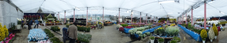 Panorama of the first tent we went in. As well as mum displays, they were selling standard bedding plants and poinsettias