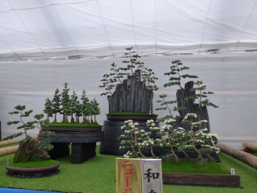 The stunning winning bonsai mum exhibit