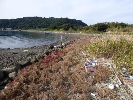 Here you can clearly see the vegetation zones, from Salsola maritima at the shoreline, to Limomium tetragonum and Atriplex, to Phacelarus latifolius